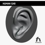Oído humano modelo 3d