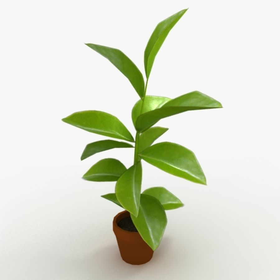 Potted Plant royalty-free 3d model - Preview no. 2