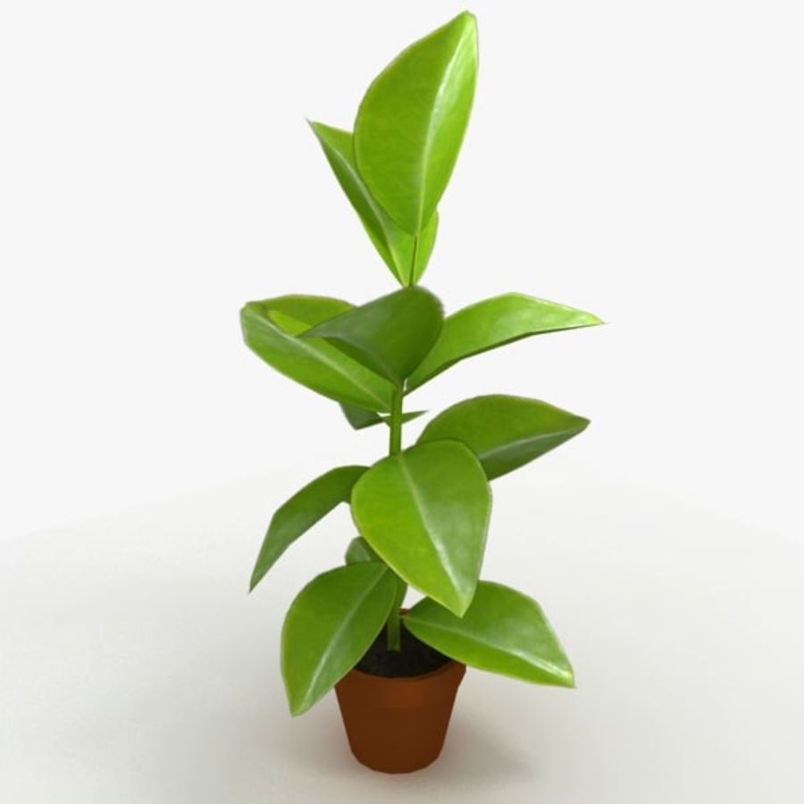 Potted Plant royalty-free 3d model - Preview no. 1