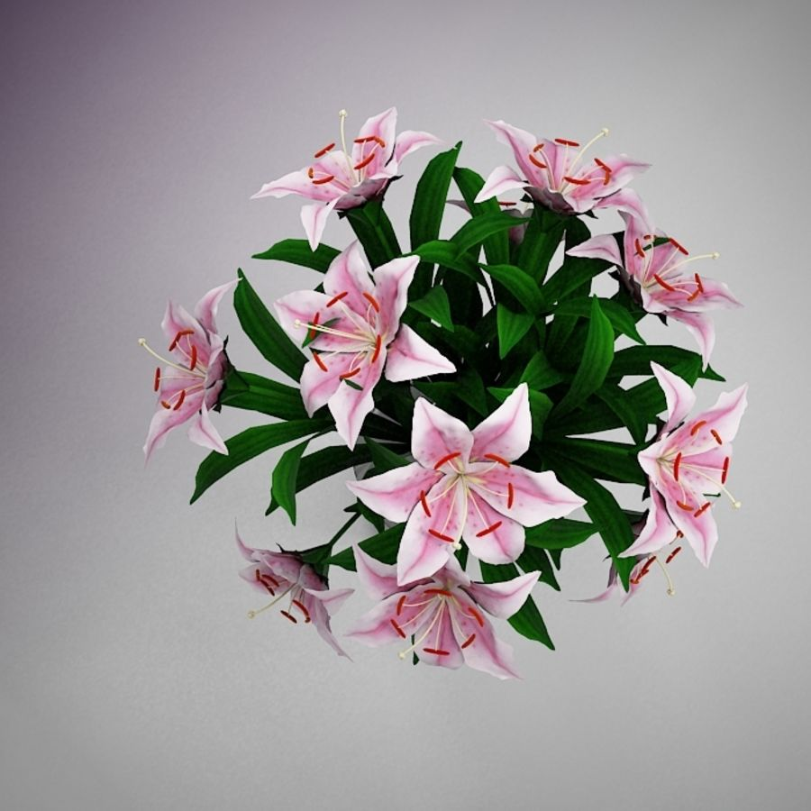 Flower Lily Pink 3d Model 9 Obj 3ds X Free3d