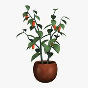 PL 01Pepper Plant03 3d model