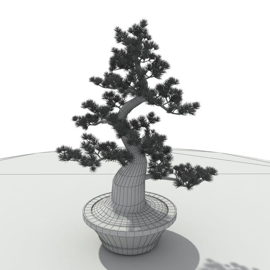 Tree - Bonsai_03 royalty-free 3d model - Preview no. 8