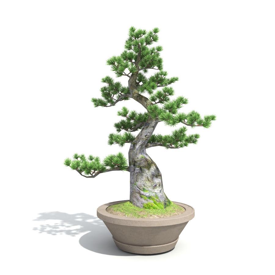 Tree - Bonsai_03 royalty-free 3d model - Preview no. 6