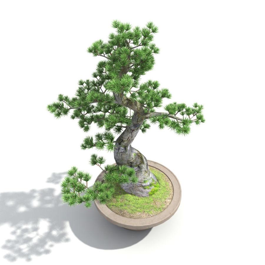 Tree - Bonsai_03 royalty-free 3d model - Preview no. 2