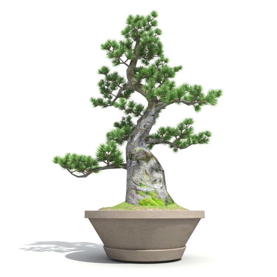 Tree - Bonsai_03 royalty-free 3d model - Preview no. 4