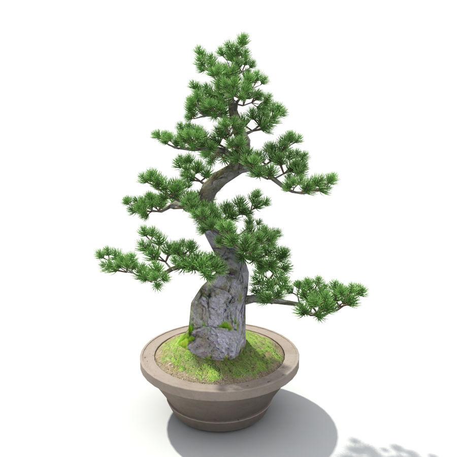 Tree - Bonsai_03 royalty-free 3d model - Preview no. 5