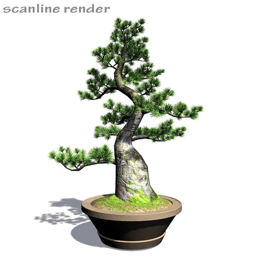 Tree - Bonsai_03 royalty-free 3d model - Preview no. 7