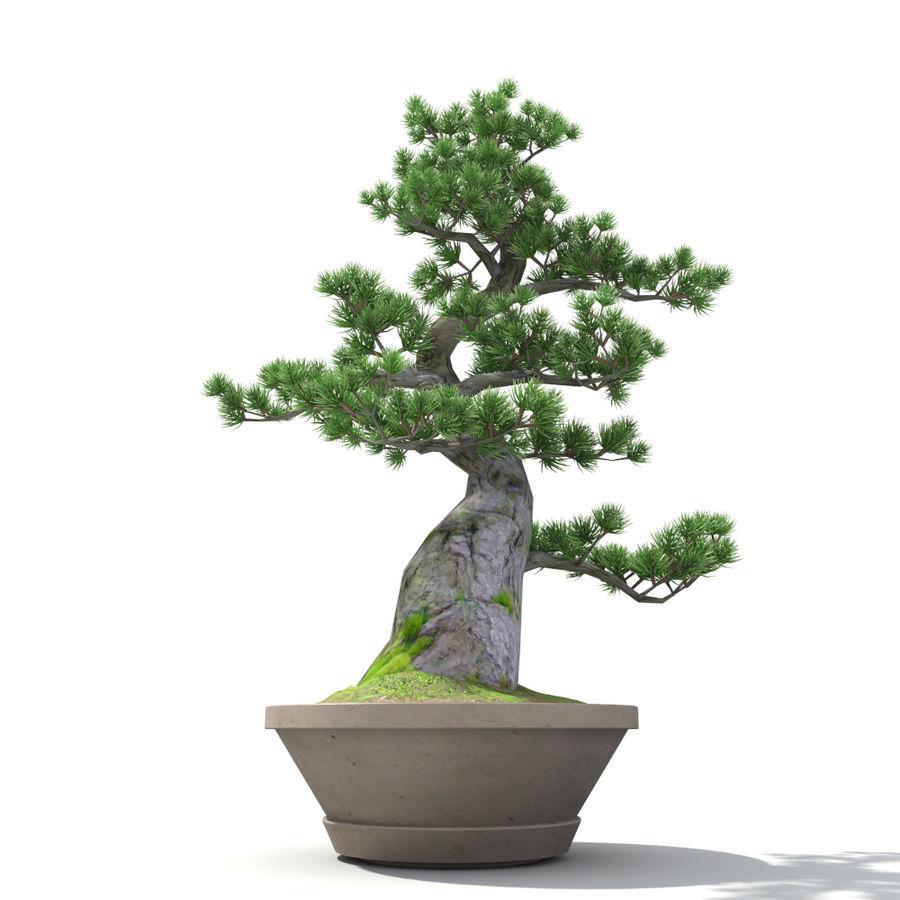 Tree - Bonsai_03 royalty-free 3d model - Preview no. 3