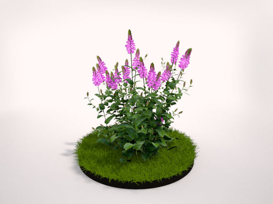 Small Plant royalty-free 3d model - Preview no. 1
