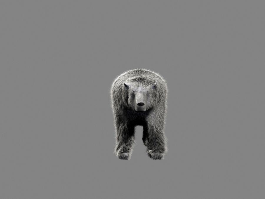 Urso polar royalty-free 3d model - Preview no. 2
