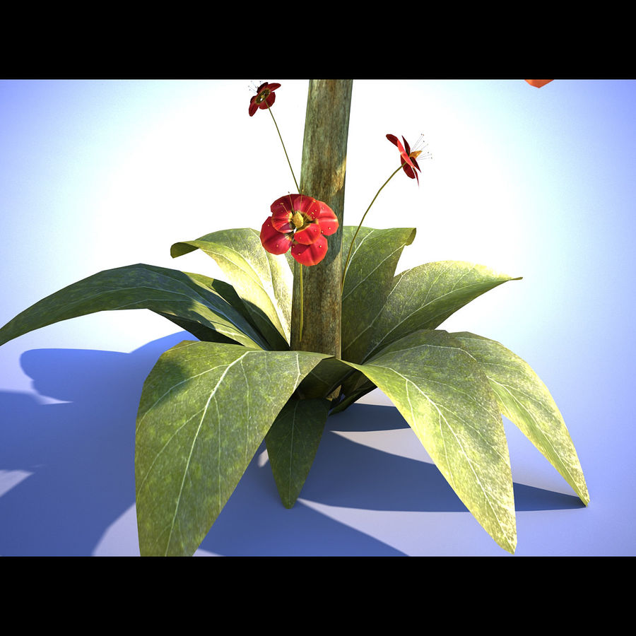 Red Flower royalty-free 3d model - Preview no. 4