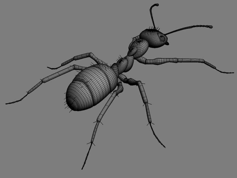 Ants royalty-free 3d model - Preview no. 7