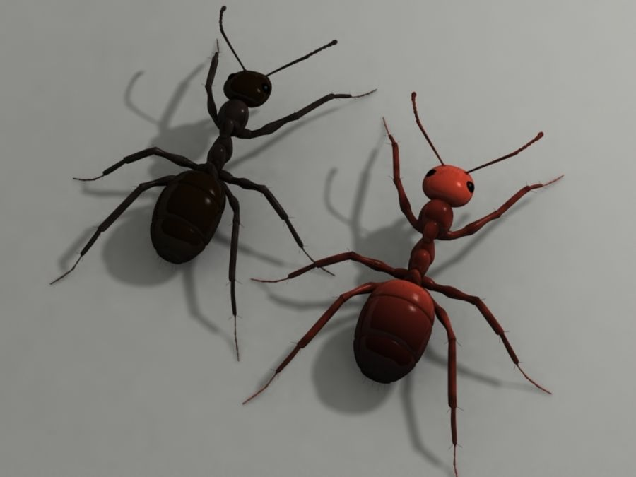 Ants royalty-free 3d model - Preview no. 2