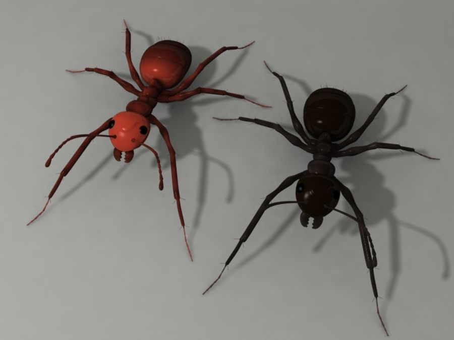 Ants royalty-free 3d model - Preview no. 3