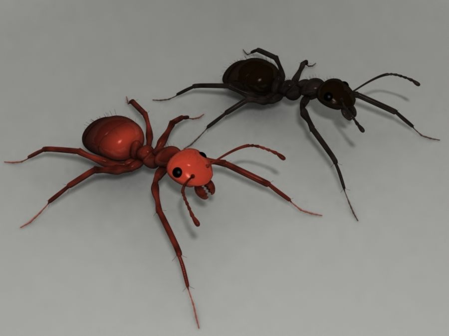 Ants royalty-free 3d model - Preview no. 1