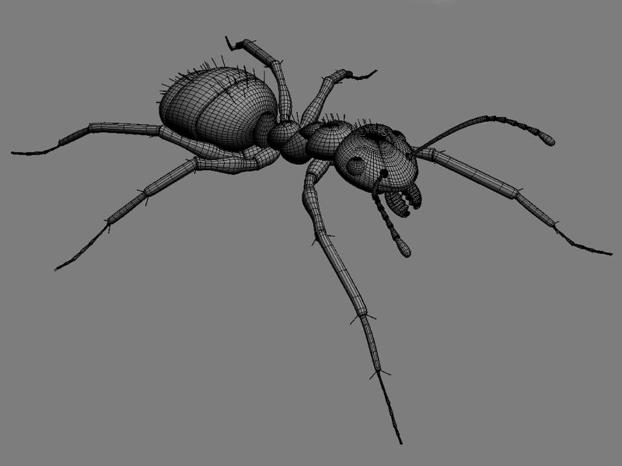 Ants royalty-free 3d model - Preview no. 6
