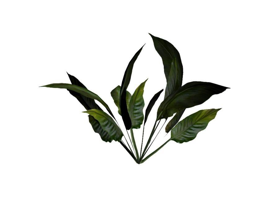 Een tropische struik royalty-free 3d model - Preview no. 3