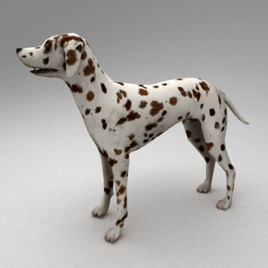 Dalmatian rigged royalty-free 3d model - Preview no. 2