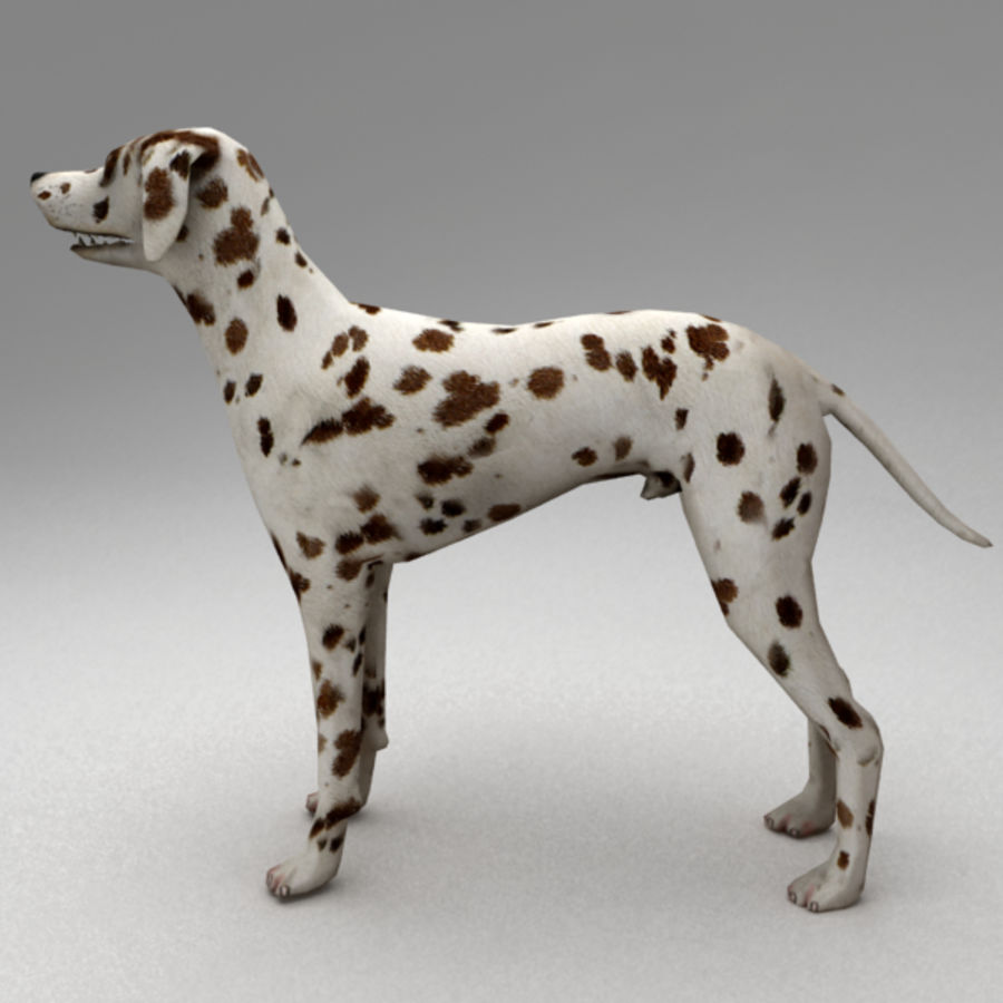 Dalmatian rigged royalty-free 3d model - Preview no. 3