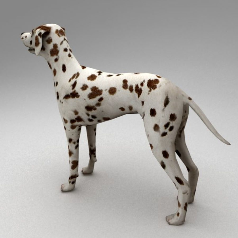 Dalmatian rigged royalty-free 3d model - Preview no. 4