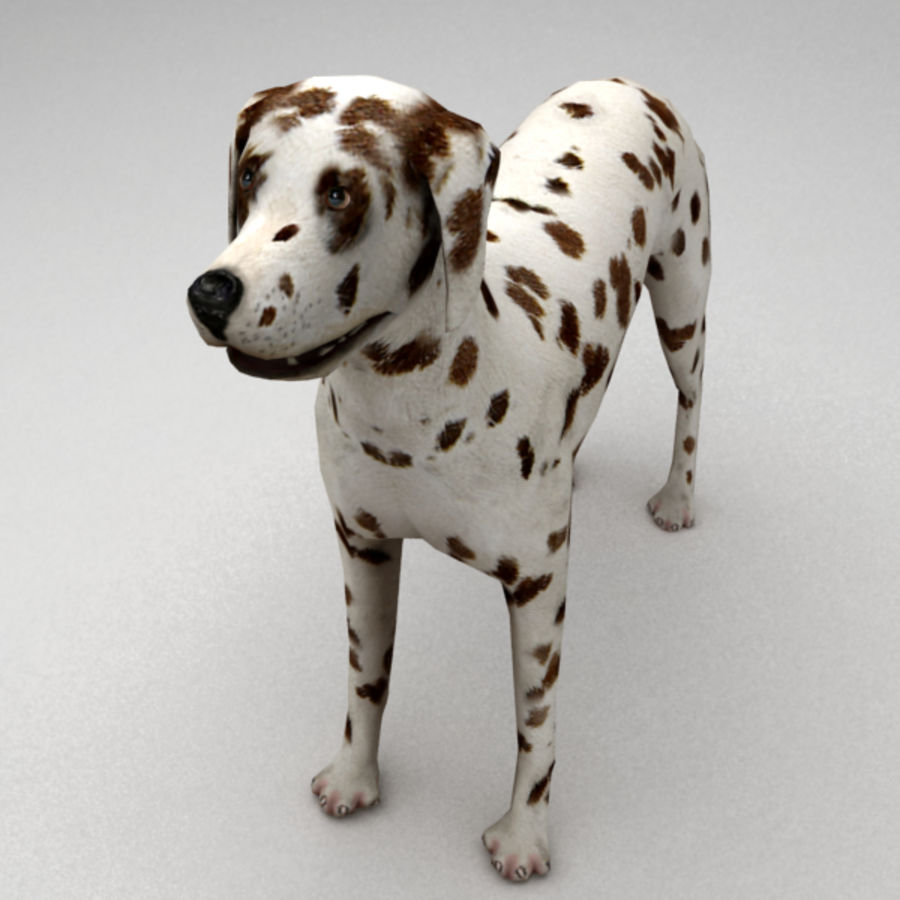 Dalmatian rigged royalty-free 3d model - Preview no. 5