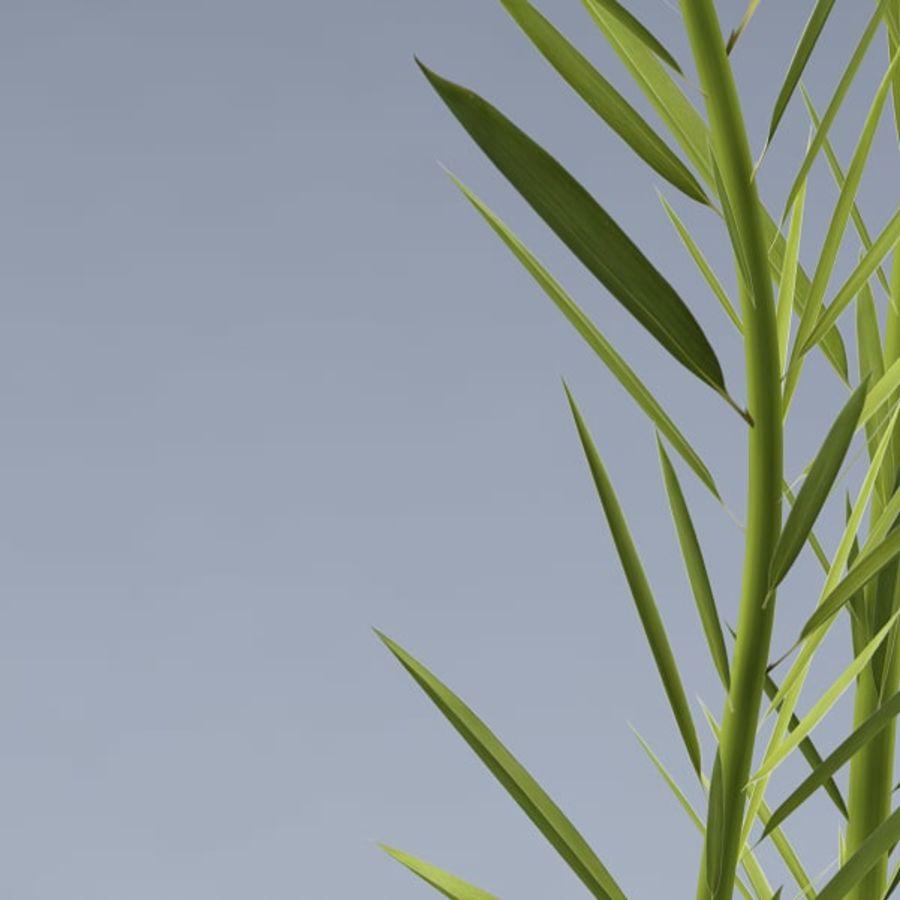 Aqua plant_01 royalty-free 3d model - Preview no. 4