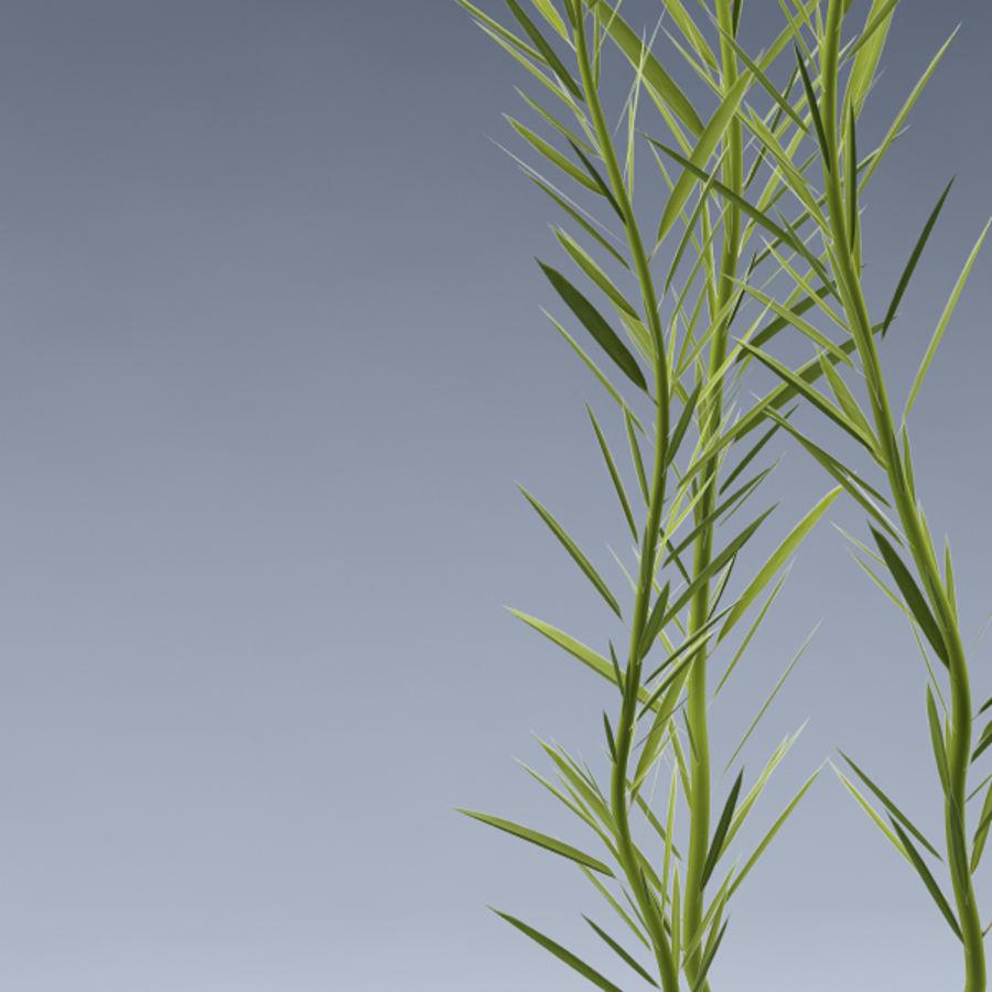 Aqua plant_01 royalty-free 3d model - Preview no. 3