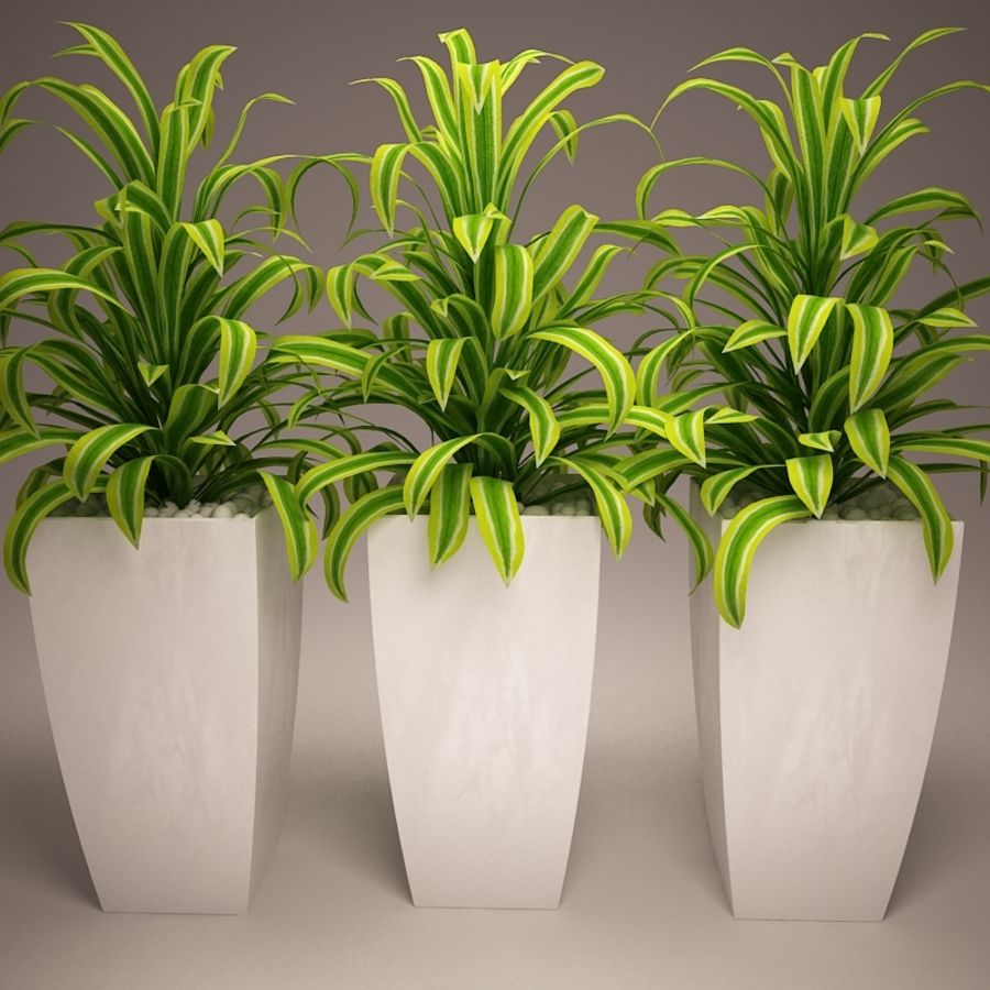 Plant and vases royalty-free 3d model - Preview no. 5