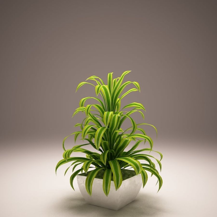 Plant and vases royalty-free 3d model - Preview no. 3