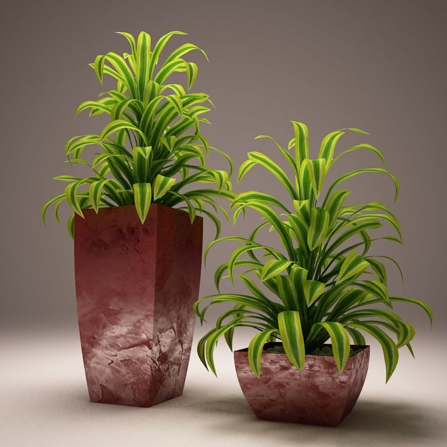Plant and vases royalty-free 3d model - Preview no. 8