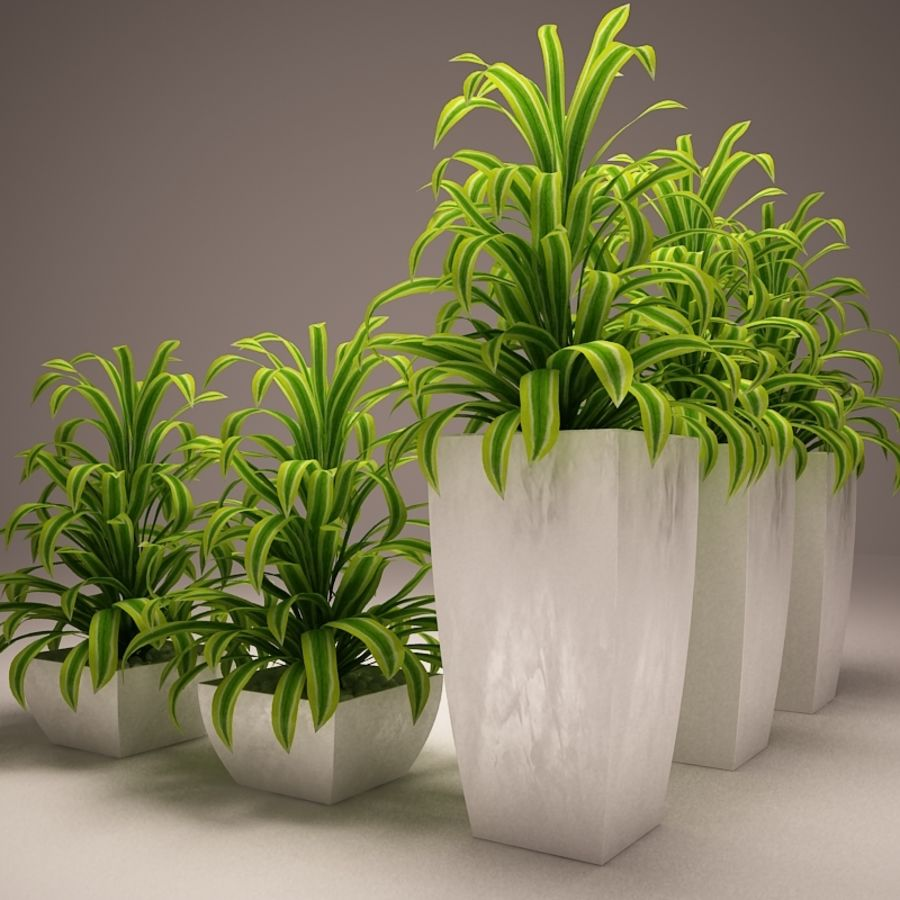 Plant and vases royalty-free 3d model - Preview no. 6