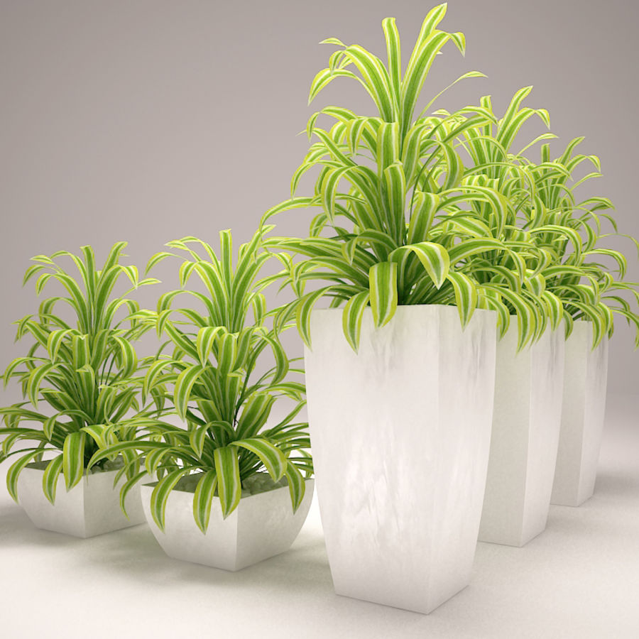 Plant and vases royalty-free 3d model - Preview no. 1
