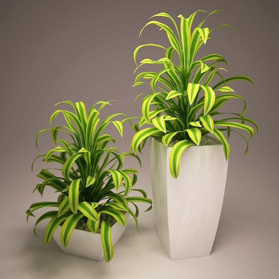 Plant and vases royalty-free 3d model - Preview no. 4