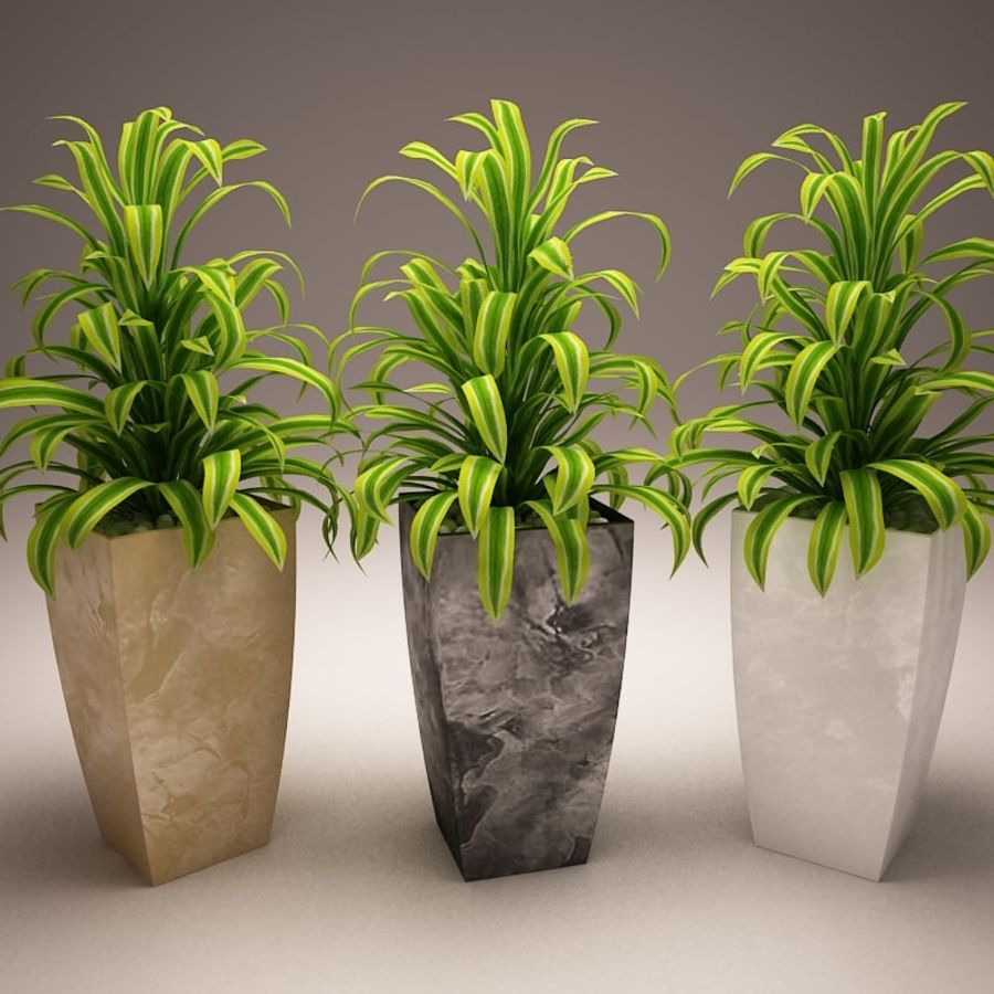 Plant and vases royalty-free 3d model - Preview no. 7