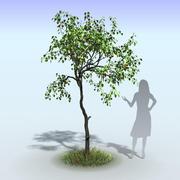 Apple Tree Set 3d model