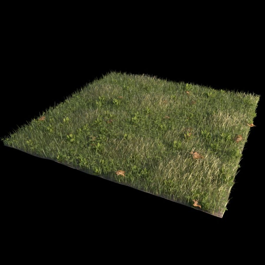 Voortuin (terrein 2) royalty-free 3d model - Preview no. 1