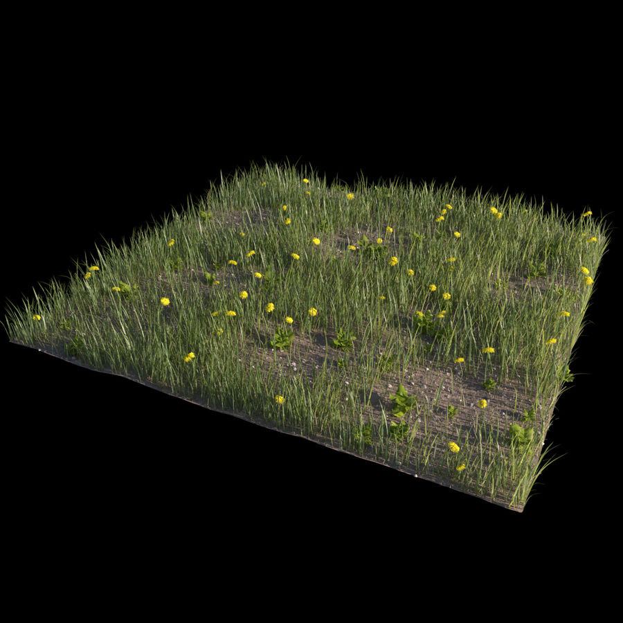 Grass and Dandelions (Terrain 1) royalty-free 3d model - Preview no. 1