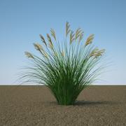 Miscanthus Sinensis 3d model