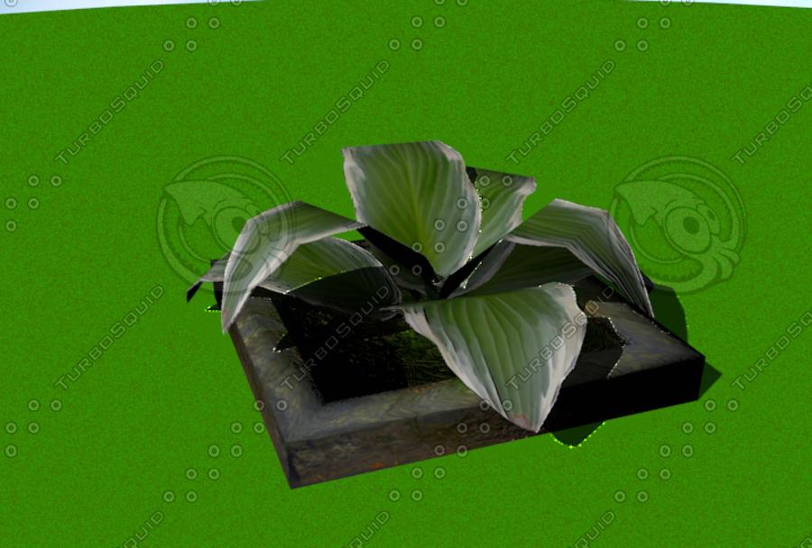 Plante royalty-free 3d model - Preview no. 3