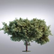 HI Realistic Series Tree - 096 3d model