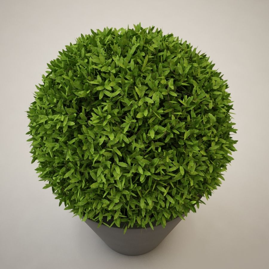 Plant for architectural interiors type D royalty-free 3d model - Preview no. 4