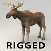 Moose rigged 3d model