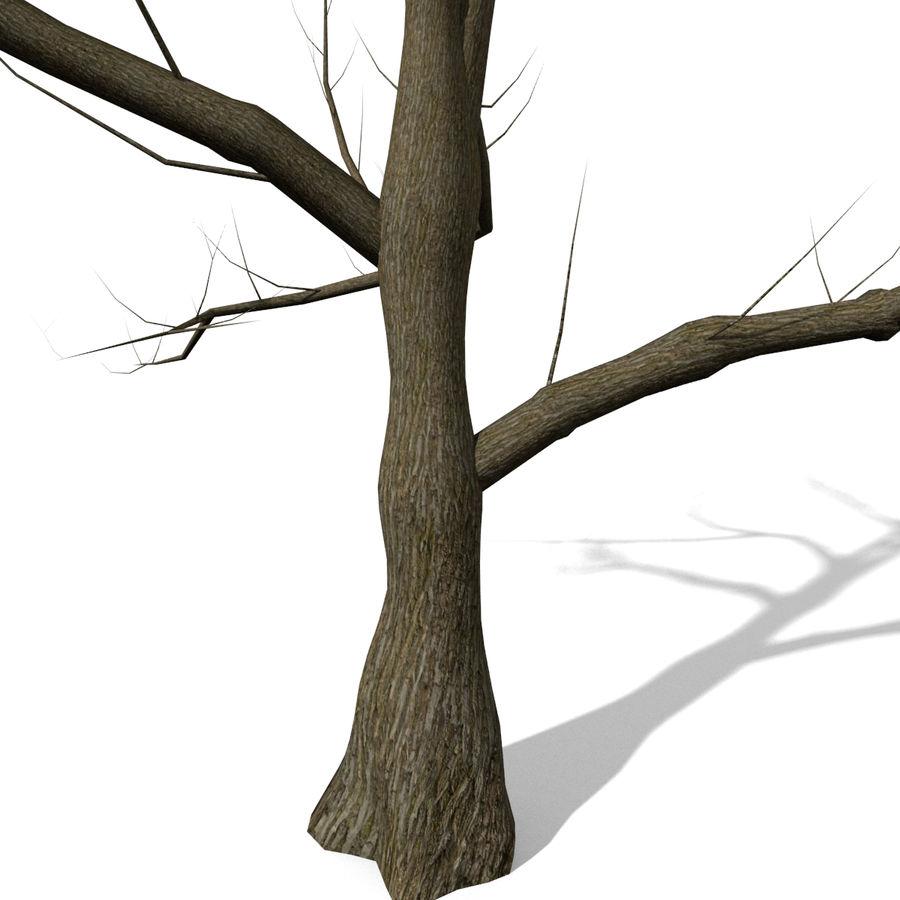 Дерево без листьев royalty-free 3d model - Preview no. 3