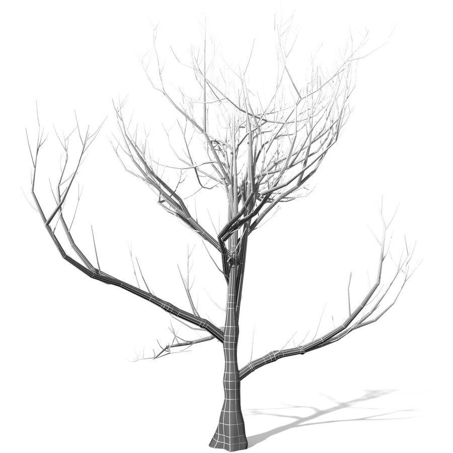 Дерево без листьев royalty-free 3d model - Preview no. 4