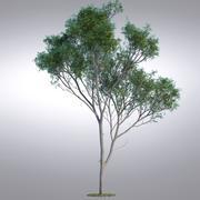 HI Realistic Series Tree - 017 3d model