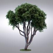 HI Realistic Series Tree - 015 3d model