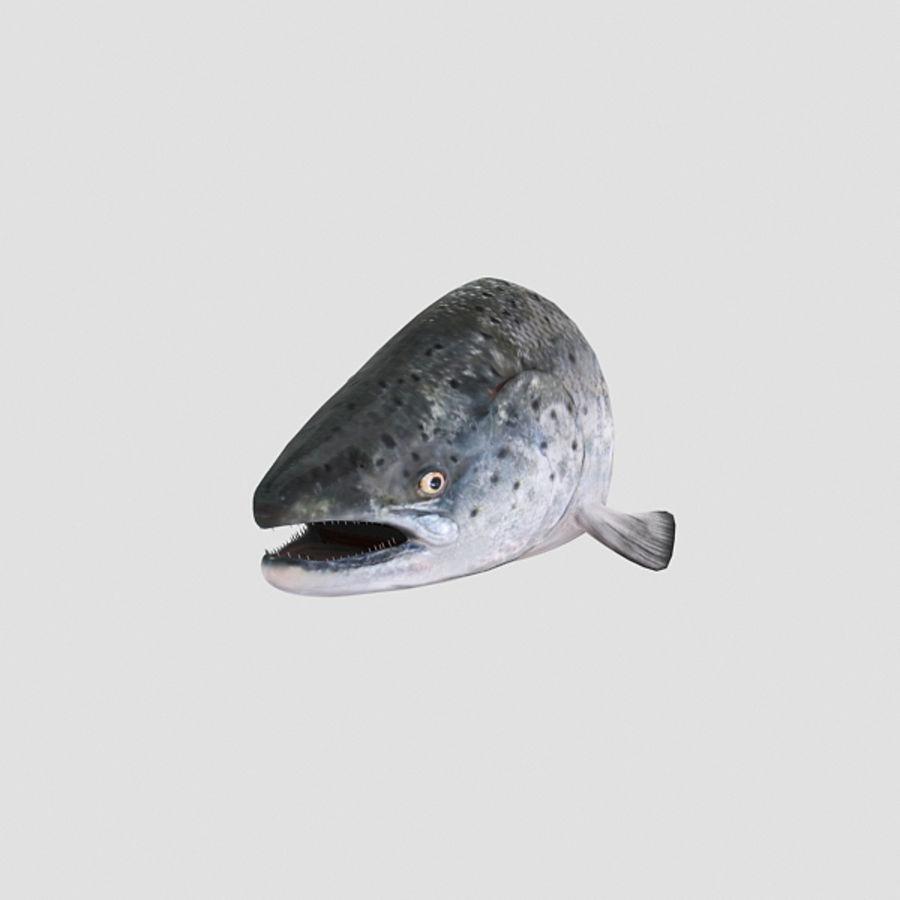 baş somon balığı royalty-free 3d model - Preview no. 3