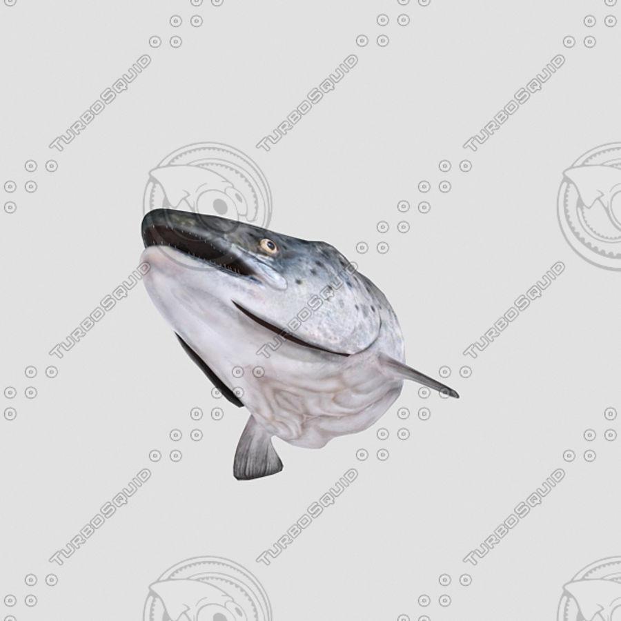 baş somon balığı royalty-free 3d model - Preview no. 5