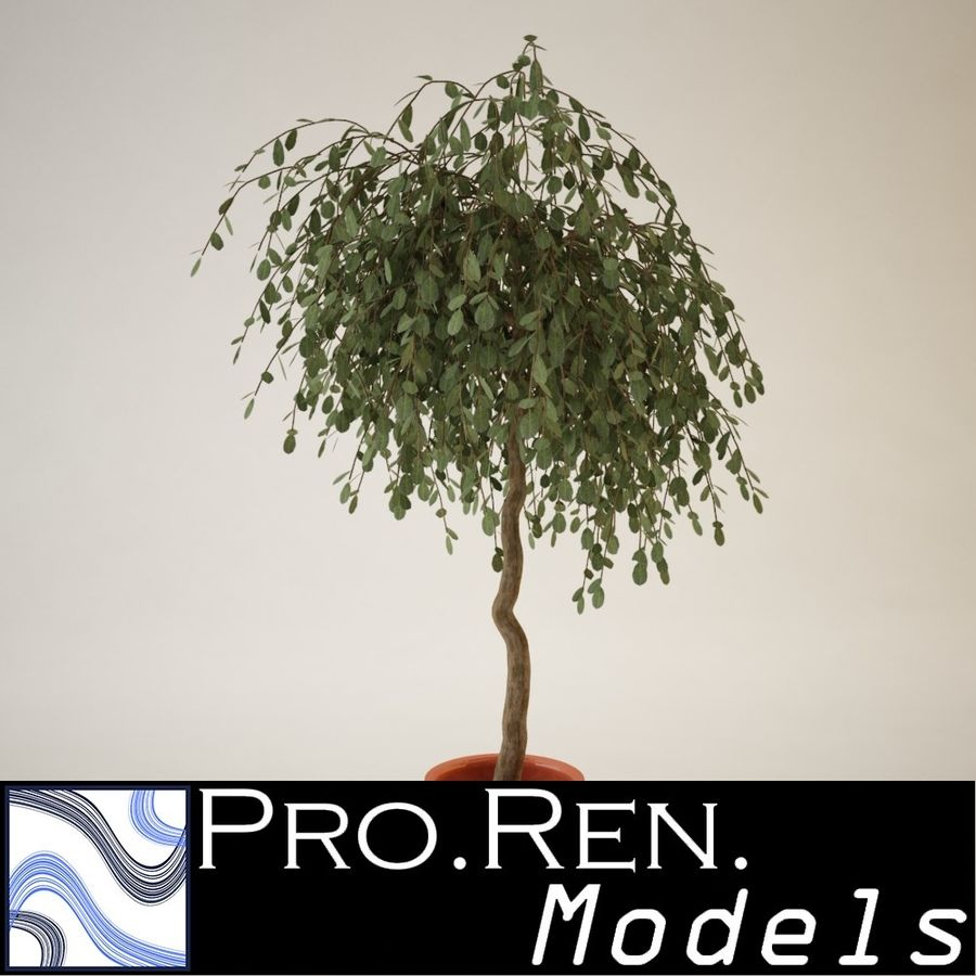 Plant for architectural interiors type G royalty-free 3d model - Preview no. 1