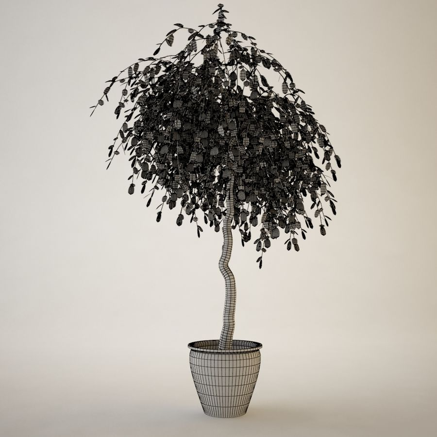 Plant for architectural interiors type G royalty-free 3d model - Preview no. 3